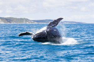 Whale_Watching_Tours